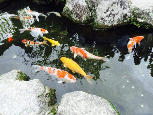 fischteich naturnahe steine
